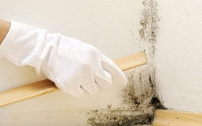 How do you solve a problem like mold?