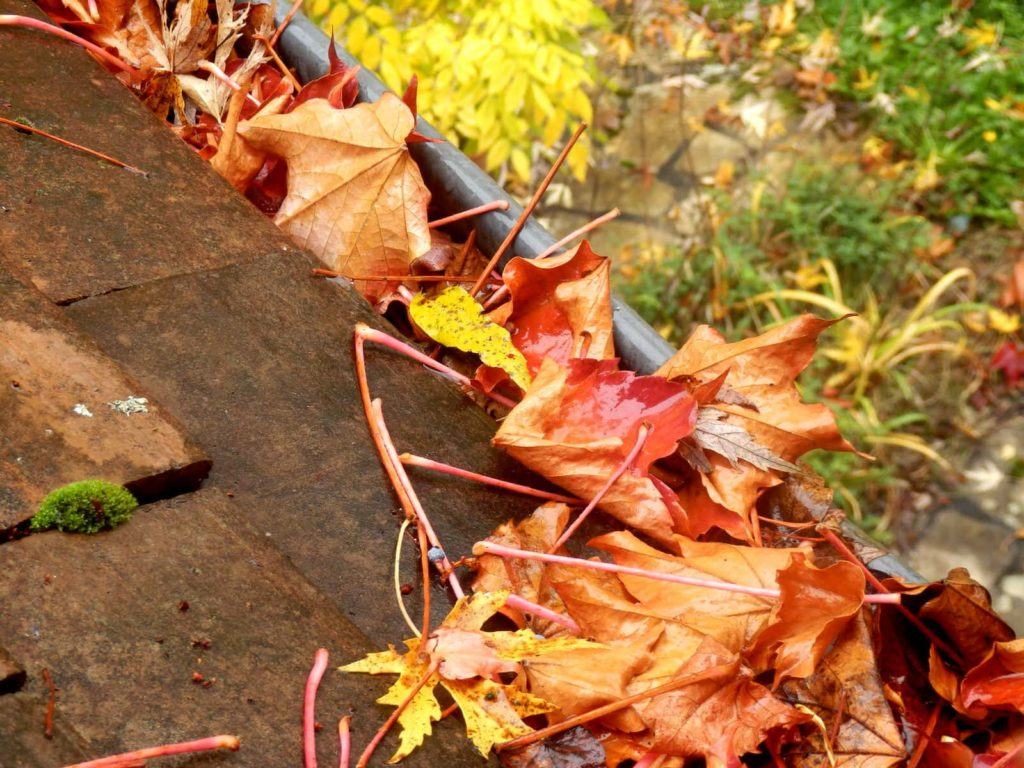 A collection of leaves blocking the a gutter rail. Cleaning them is part of your autumn home maintenance.