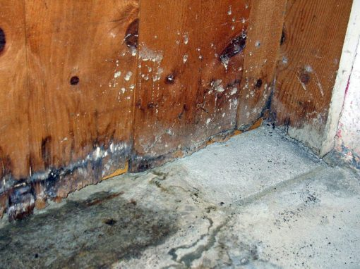 Ten Things You Should Know About Mold